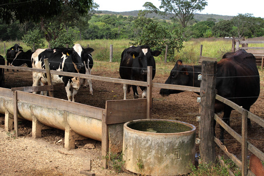 Crédito ajuda agricultor a aumentar a produção de leite