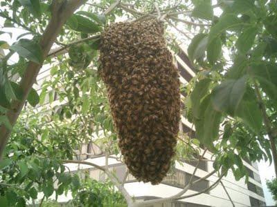 abelhas 01