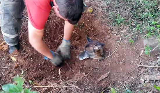 Cadela-Enterrada