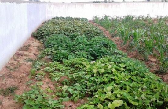 cemiterio-pombal-2