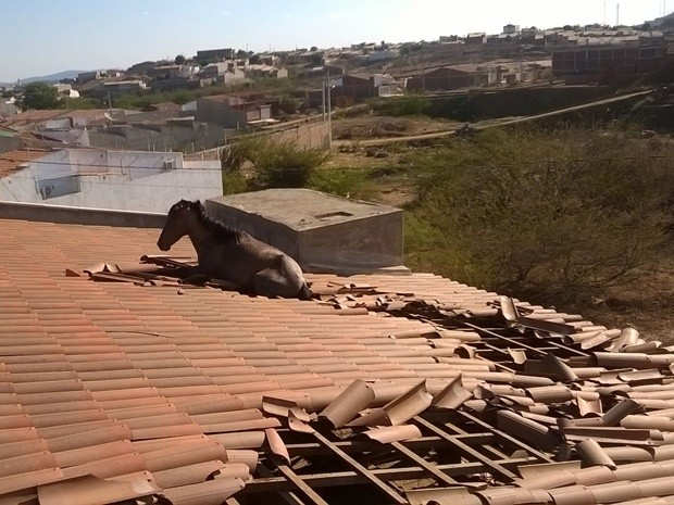 cavalo_em_telhado_em_cajazeiras