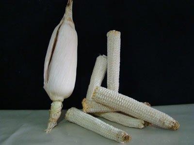 sabugo-de-milho