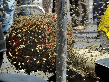 abelhas-m-20100525