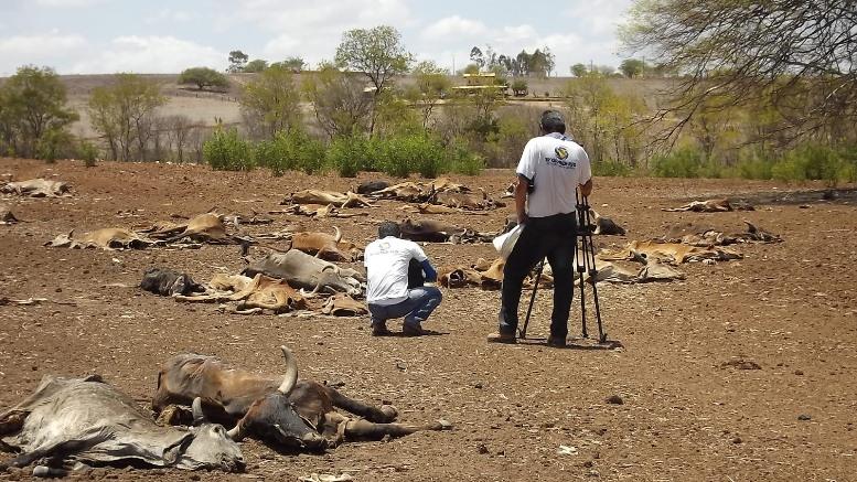 imagens imagens da seca no nordeste 5