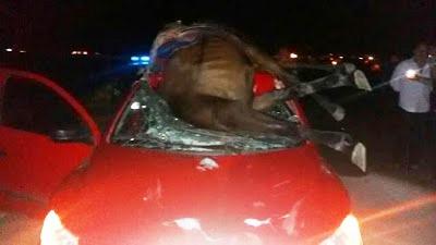 cavalo sobre o carro