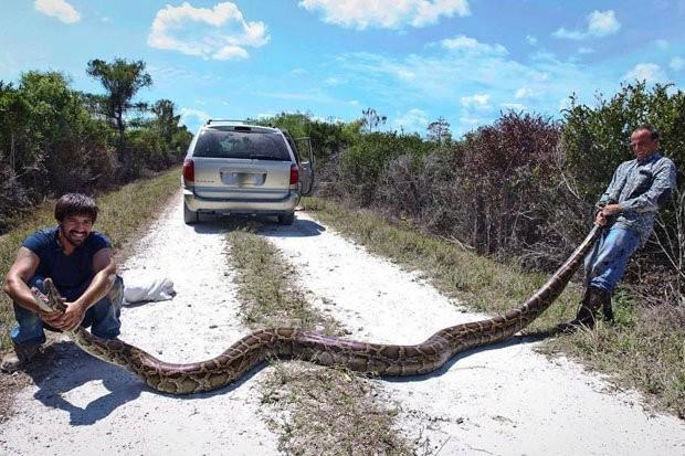 blog python