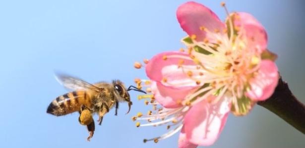 a importancia das abelhas na presenca de nutrientes nos alimentos e algo recentemente descoberto
