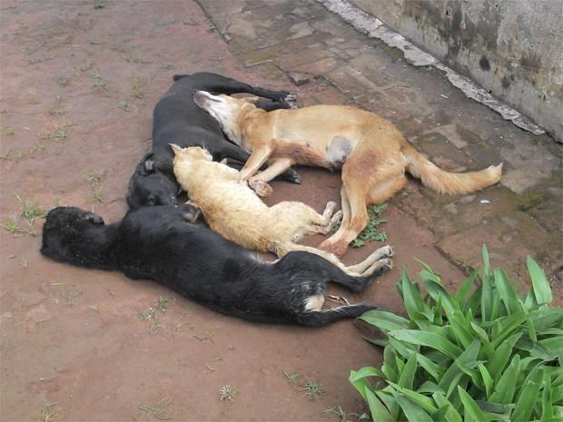 animais mortos