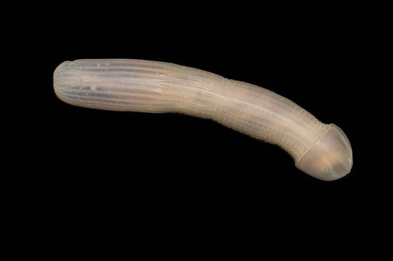 blog sea worm