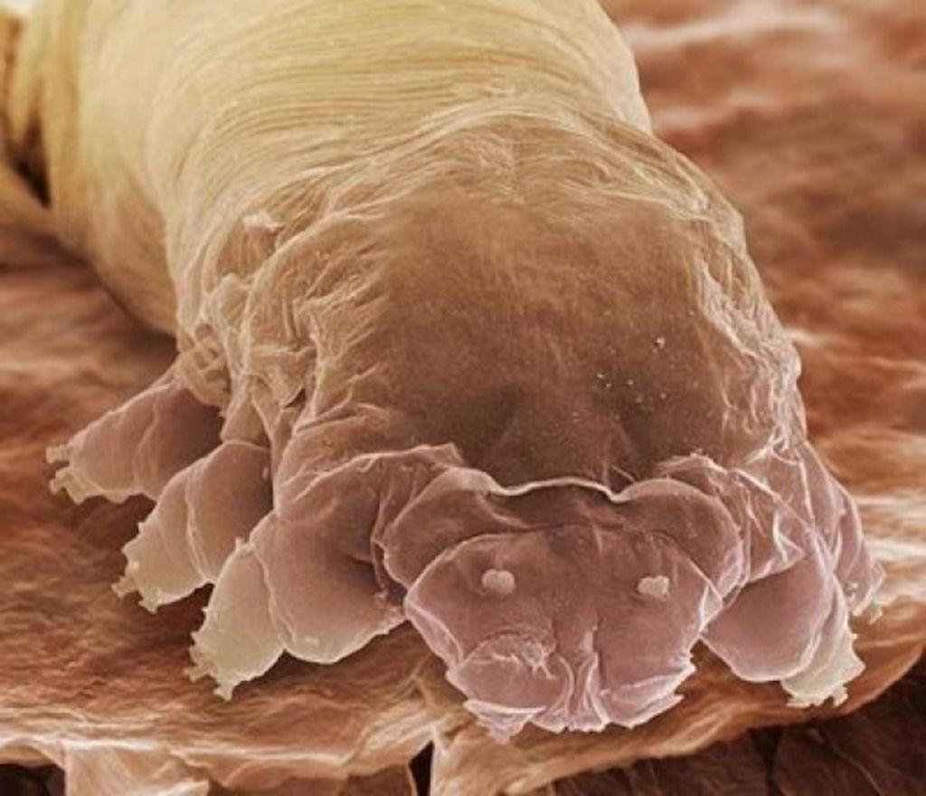 coisas sobre microscopio 03
