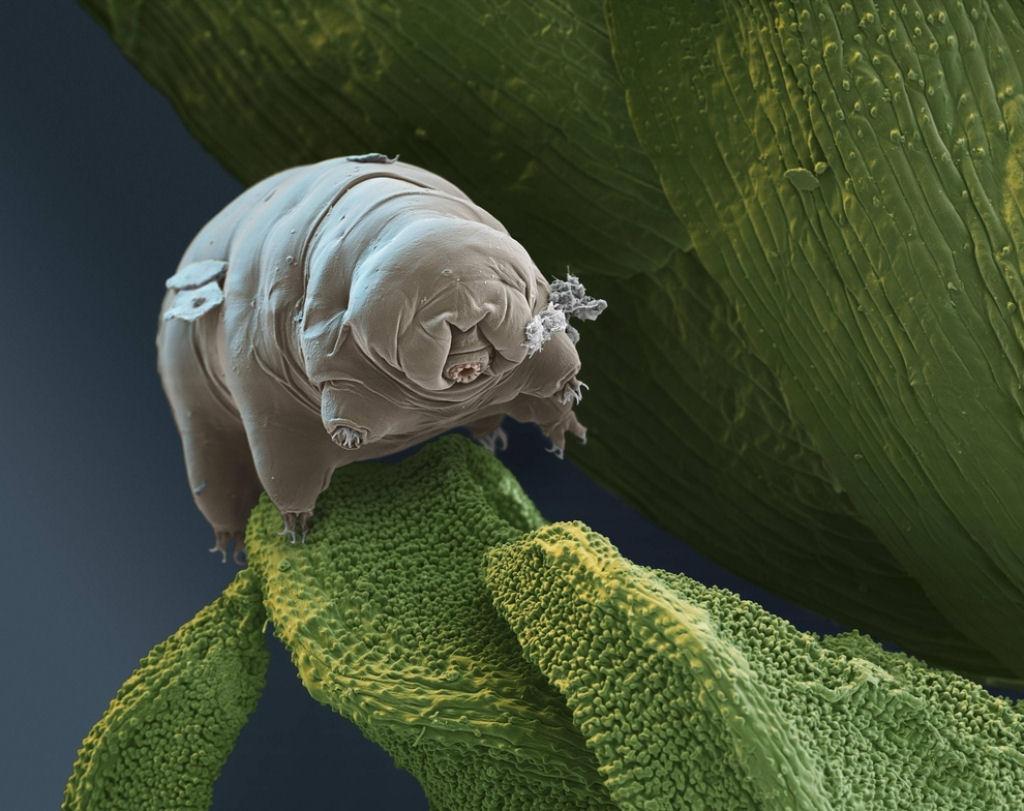 coisas sobre microscopio 25