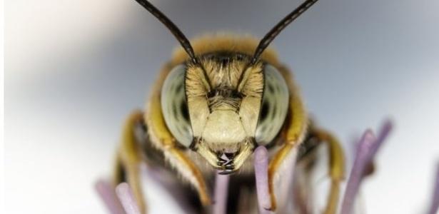 embora as abelhas nao sejam as unicas polinizadoras representam 90 desse servico por um vetor animal