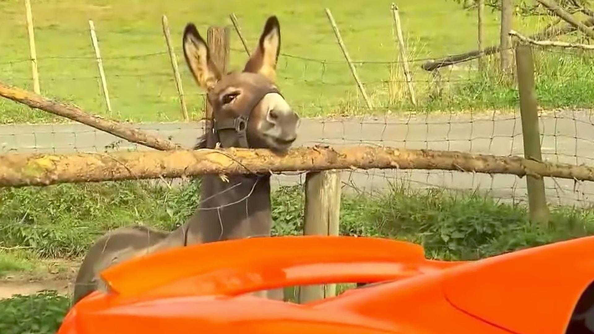 donkey mclaren