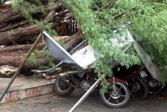 motos atingidas com queda de árvore em queimadas