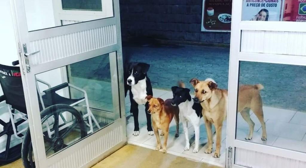 Cachorrosaesperadomoradorderua 1