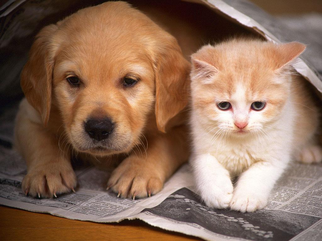amigos cao e gato dfaff