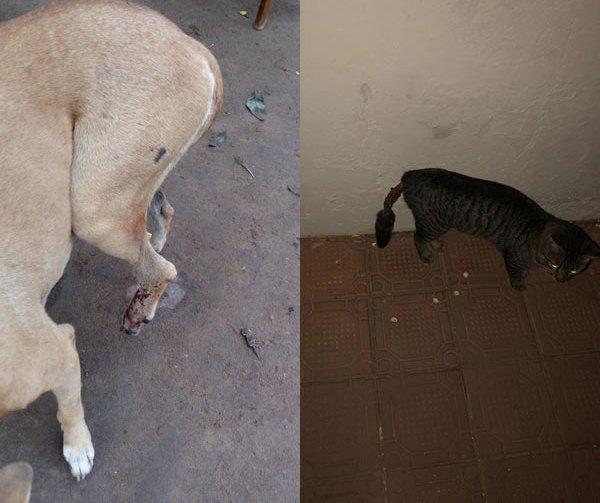 caes e gatos