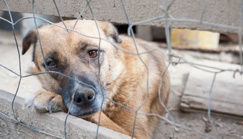cachorro triste preso abandonado 0718