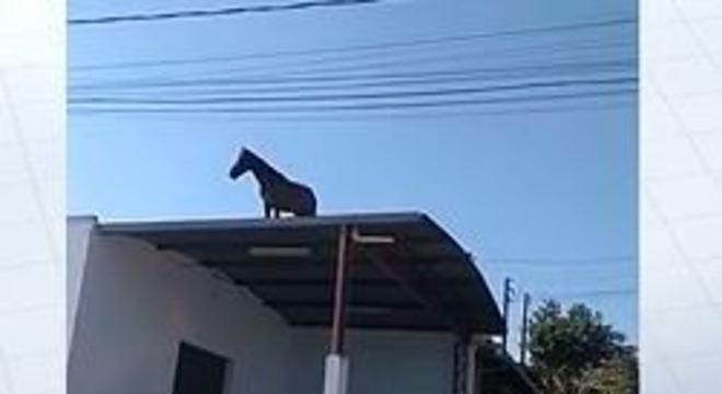 cavalo telhado 16082019085214181
