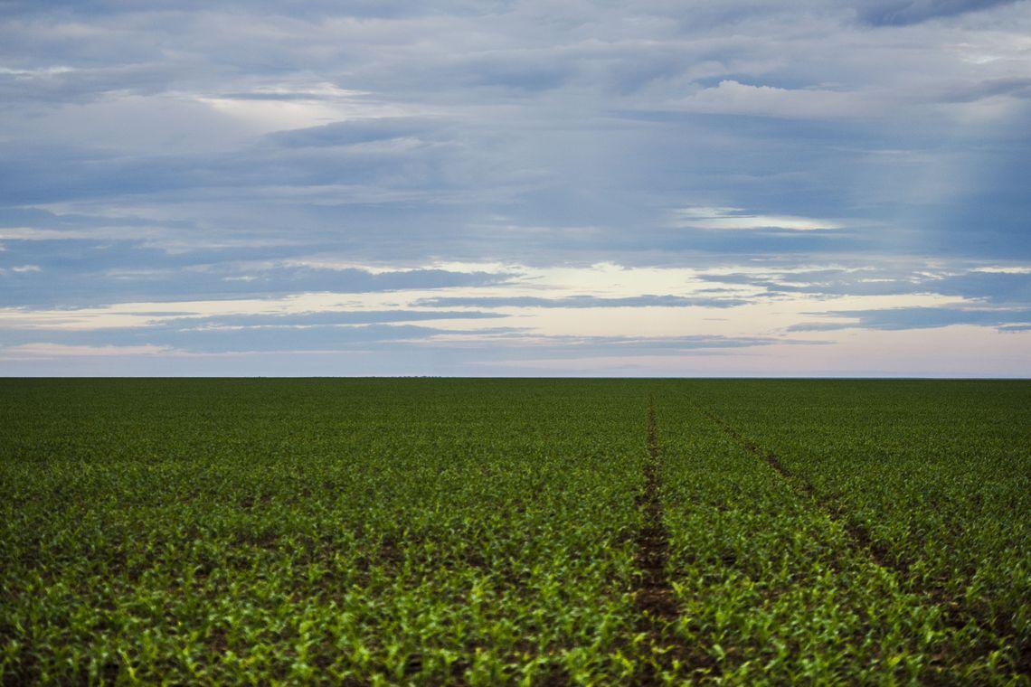 Brasnorte, MT, Brasil: Área de plantação de soja próxima ao município de Brasnorte, noroeste do Mato Grosso.